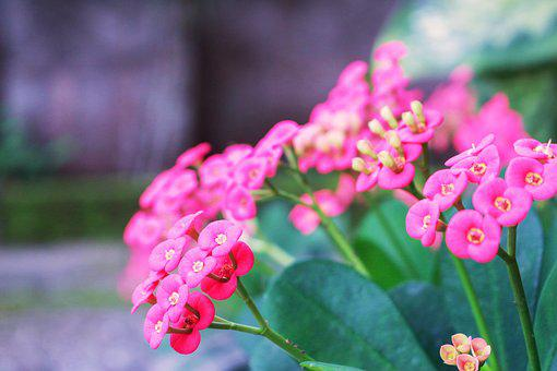 Spring, Flower, Floral, Summer, Nature, Design