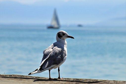 Seagull, Bird, The Horizon, Blue, Beach, Lake, Quiet