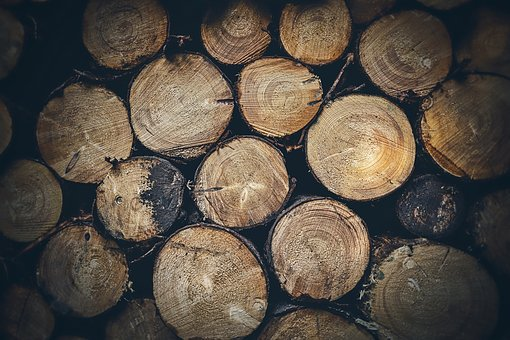 Wood, Trunks, Tree, Forest, Timber