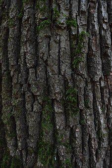 Bark, Tree Bark, Wood, Background, Nature, Tribe, Tree
