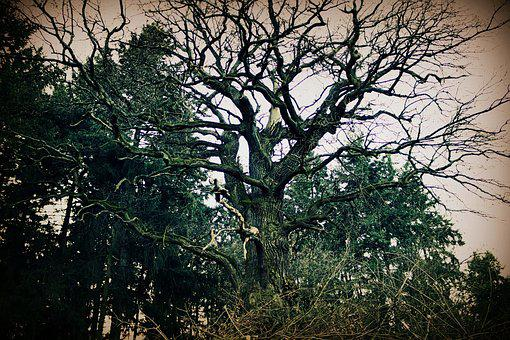 Tree, Forest, Gloomy, Idyllic, Mood, Atmosphere, Wood