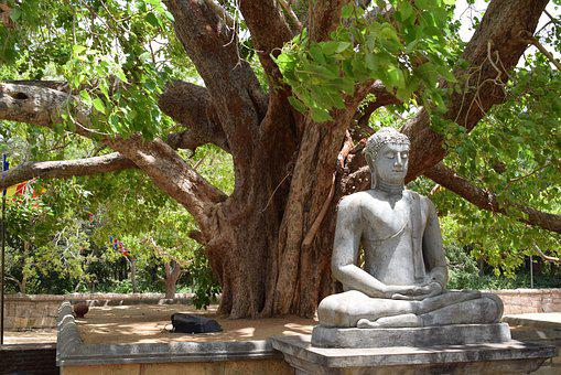 Buddha, Forest, Asia, Srilanka, Nature, Green, Tree