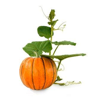 Pumpkin, Background, Natural, Vegetarianism, Vegetables