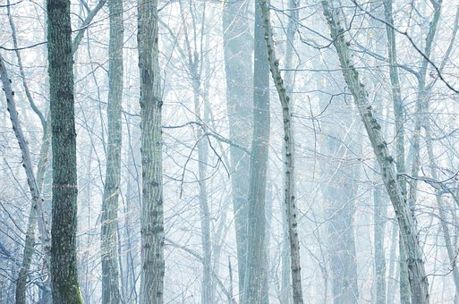 Fog, Fall, White, Nature, Trees, Landscape, Forest