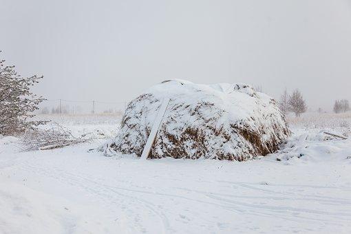 Winter, Rick, Snow, White, Russia, Cold, Frost, Field