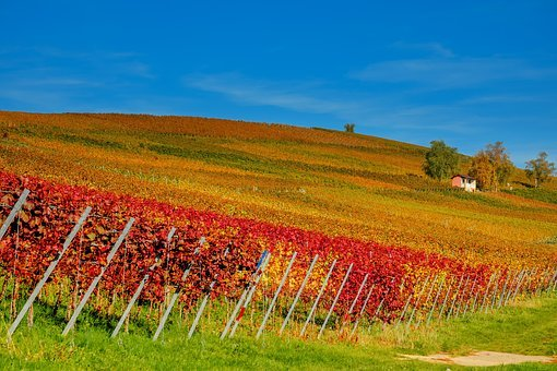 Vineyard, Vines, Winegrowing, Slope, Wine, Wine Region