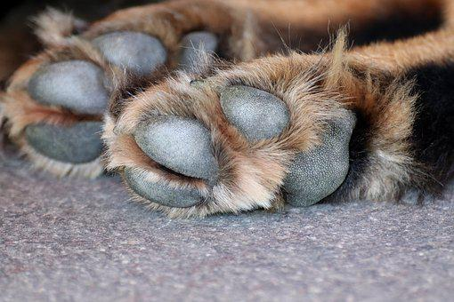 Dog Paw, Dog, Paw, Animal Paws, Pet, Fur, Large, Brown
