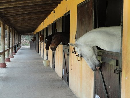 The Horses Are, Barn, White, Brown, Head, Overview