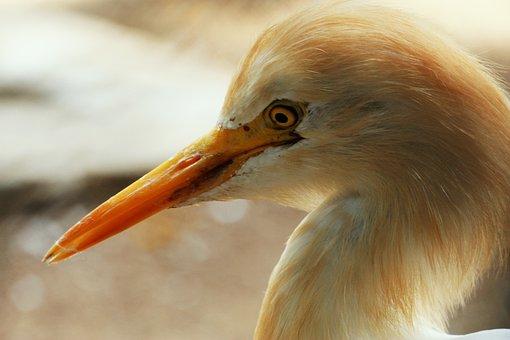 Bird, Bird-watching, Long, Beak, Long Neck