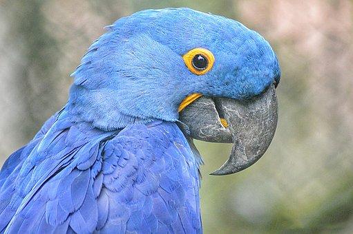 Bird, Parrot, Animals, Wings, Landscape, Blue, Beauty