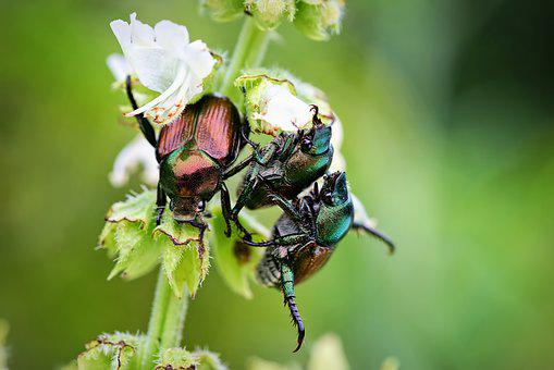 June Bugs, Insects, Bugs, Summer, Bugs On Plant, Beetle