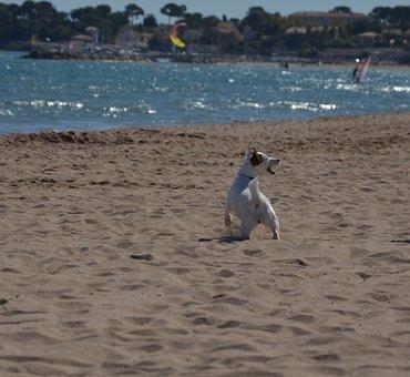Dog, Dear, Friend, Good, Protector, Happy, Animal, Race