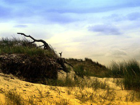 Dune, Sand, Drift Wood, Beach, Nature, Sea, Coast, Wood