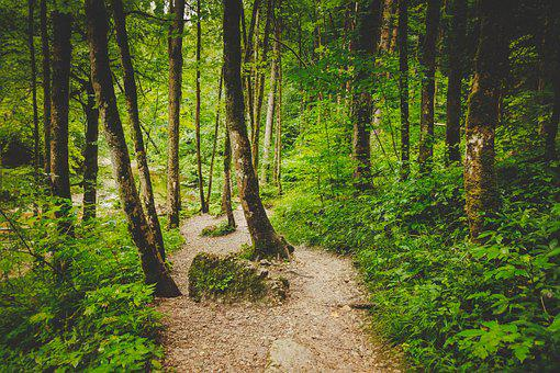 Forest Path, Alone, Eistobel, Isny, Waterfall, Nature