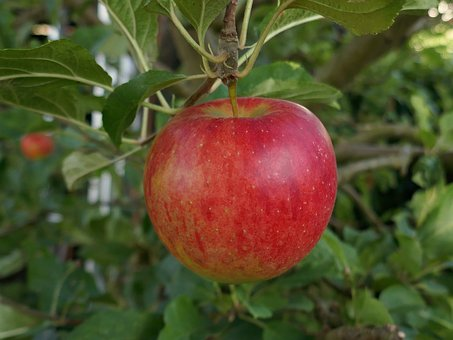 Apple, Red, Healthy, Fresh, Vitamins, Fruit, Delicious