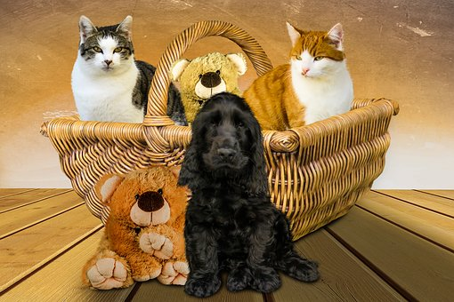 Emotions, Animals, Dog, Cat, Basket, Teddy, Friends
