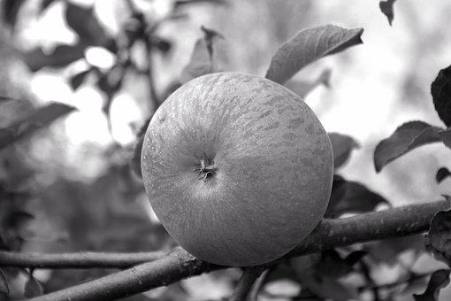 Apple, Tree, Fruit, Kernobstgewaechs, Nature, Ripe