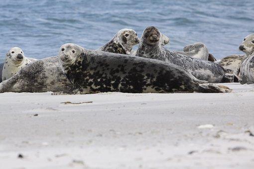 Robbe, Nature, Mammal, Animal, Water, Seal