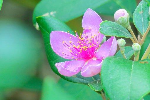 Flower, Natural, Summer, Flowering, Plant, Fresh