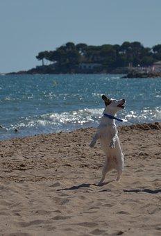 Dog, Pet, Young, Nature, Friend, Trust, Cute, Friends