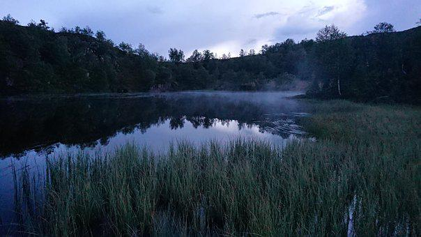 Water, Mist, Lake, Evening, Reflections, Trees, Reeds