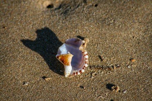 Shell, Sand, Beach, Coast