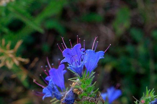 Blossom, Bloom, Inflorescence, Stamen, Plant, Flower