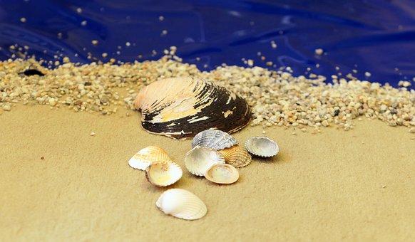 Beach, Mussels, Sand, Coast, Sea, Summer, Vacations