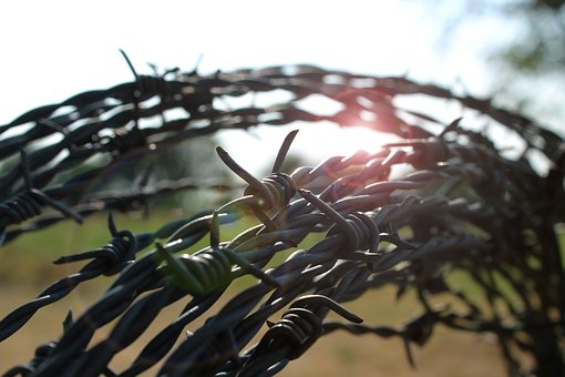 Barbed Wire, Backlighting, Sunrise, Sun, Close Up
