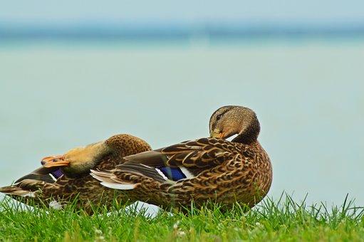 Hungary, Lake Balaton, Lake, Water, Summer, Travel