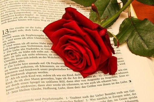 Rose, Bible, Wedding, Book, Romantic, Love, Religion