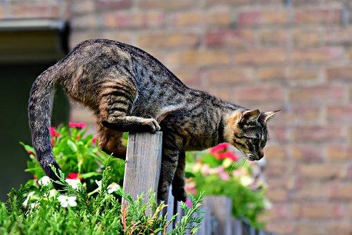 Cat, Animal, Mammal, Fence, Cat On Fence, Tabby