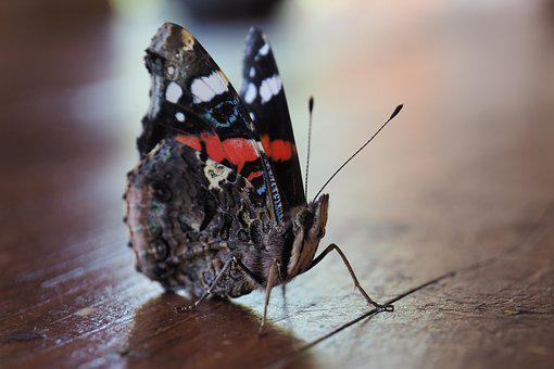 Butterfly, Colors, Insect, Wood, Animal, Color, Ala