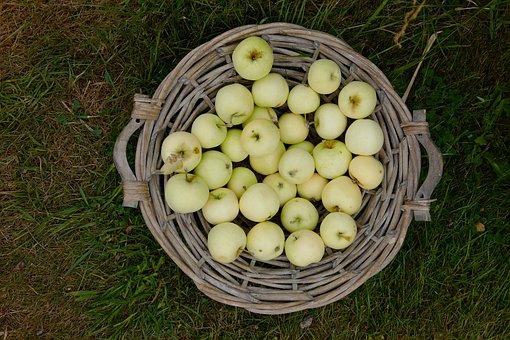 Apple, Basket, Fruit, Harvest, Apfelernte