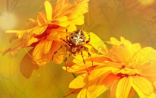 Crusader Garden, Female, Arachnids, Flower, Garden