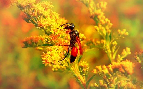 Grzebaczowate, Błonkówka, Insect, Animals, Flower