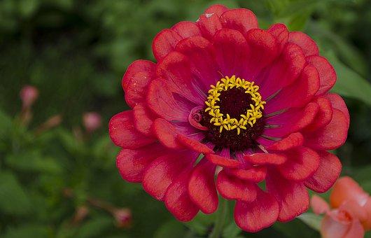 Flower, Zena, Detail, Pollen, Nature, Bloom, Sunny