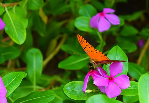 Butterfly, Nature, Insect, Animal, Flower, Colorful
