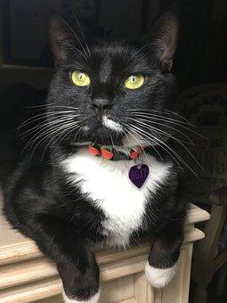 Cat, Green Eyes, Animals, Kitten, Cute, Pets, Feline