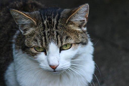 Cat, Domestic Cat, Kitten, Mieze, Pet, Lurking