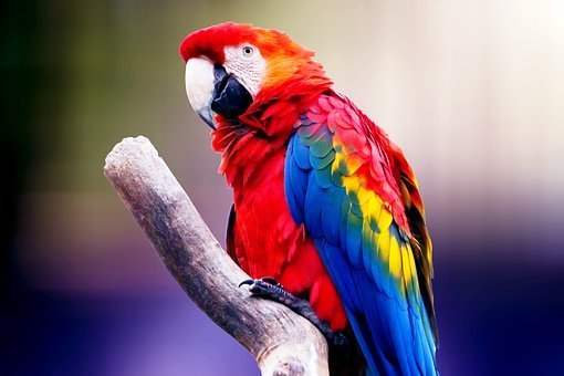 Bird, Parrot, Exotic, Plumage, Animal, Colorful, Nature
