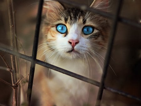 Cat, Nice, Blue Eyes, Funny, Cute, Animals