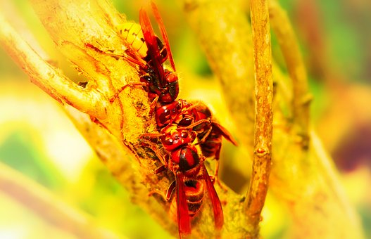 European Hornet, Insects, Branch, The Bark, Tree