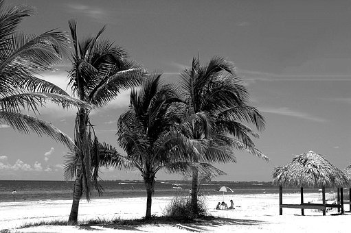 Fort Myers Beach, Florida, Palm Trees, West Coast