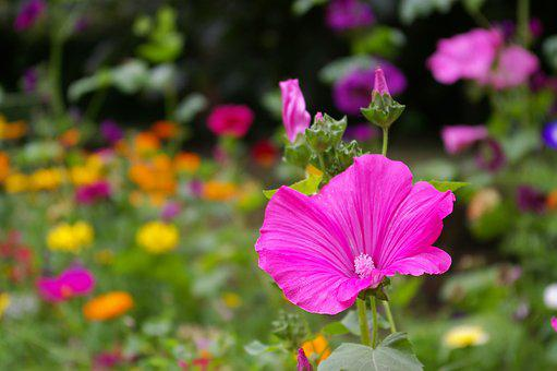 Flower Meadow, Wild Flowers, Meadow, Nature, Bloom