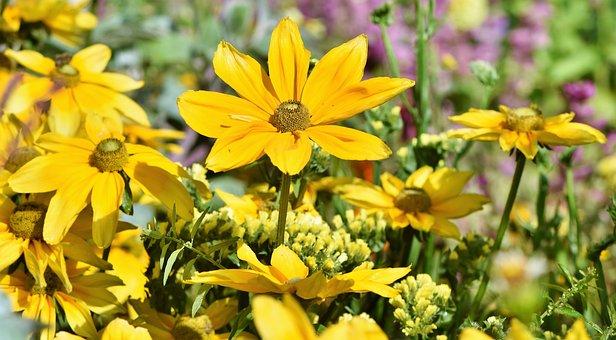 Flower Bed, Flower Meadow, Flowers, Yellow, Bloom