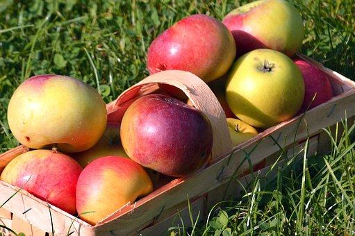 Apple, Fruit, Fruit Basket, Basket, Harvest, Apfelernte