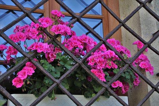 Window Sill, Grating, Geraniums, Pattern, Stone, Rust