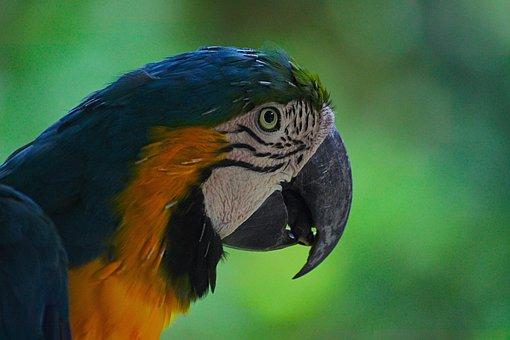 Ara, Parrot, Bird, Colorful, Nature, Eye, Green