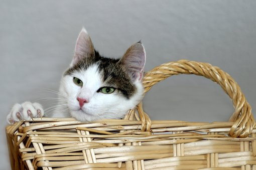 Cat, Domestic Cat, Basket, Lying, Pet, Animal, Kitten